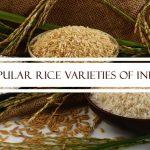 Popular Rice Varieties of India